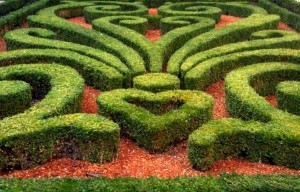 2 GREEN MAZE photo 300x192 Overcoming trauma and how life can be beautiful