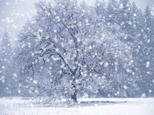 DX Winter Snow Screensaver 1 300x225 Article: Overcoming trauma and how life can be beautiful.