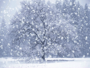 Winter Snow - Screensaver