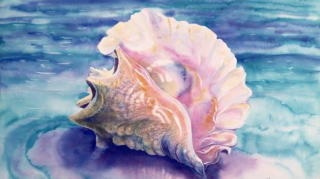 Caribbean Queen Conch Shell