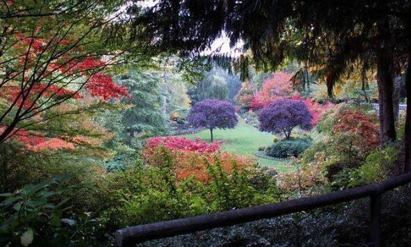 Colourfull Garden