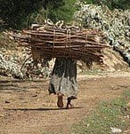 Woman Carrying Bundle of Wood - Ethiopia