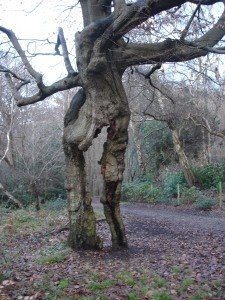 Tree shaped as a woman