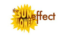 SunflowerEffectConfidenceCourses